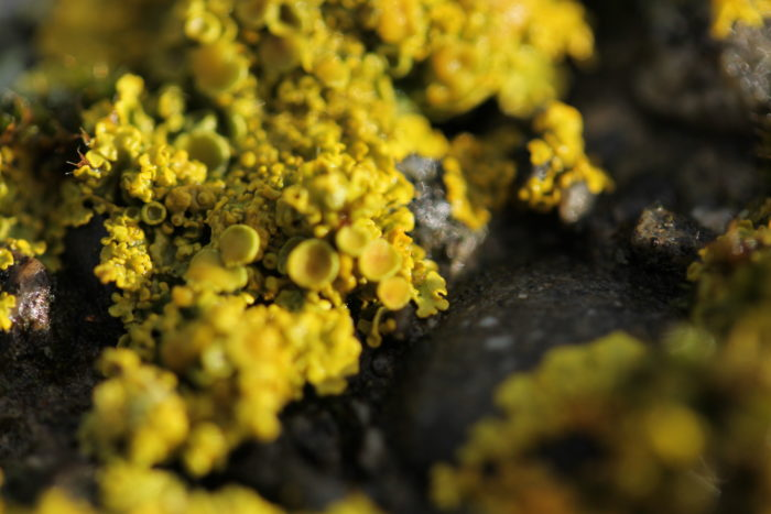 Lichens captured by Birgit Moffatt