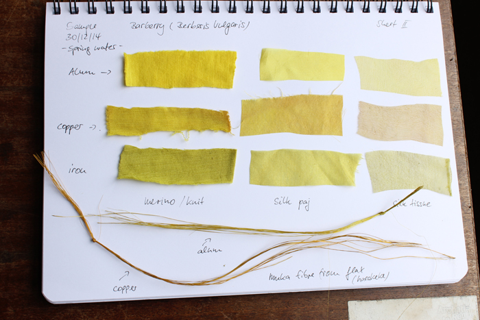 Colour swatches from the barberry dying experiment