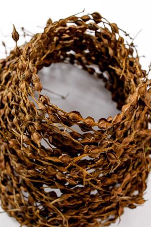 Kowhai seed pods sculpture by Birgit Moffatt