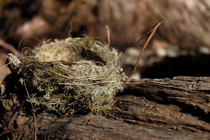 nest photo by Birgit Moffatt