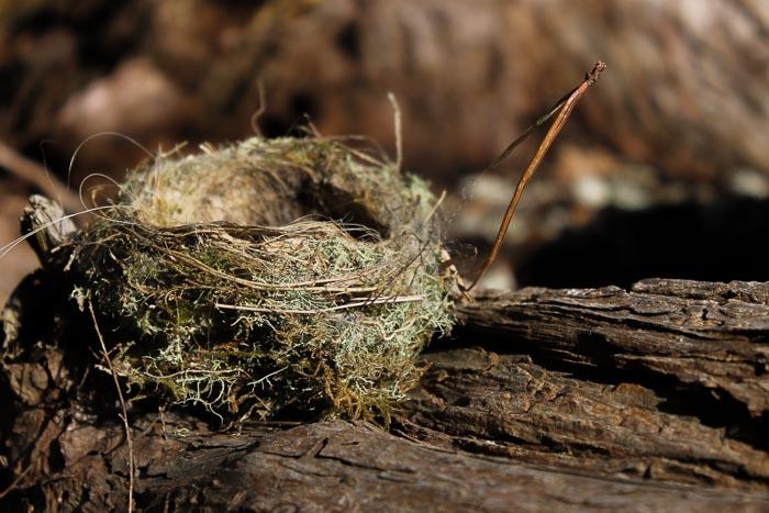 nest photo by Birgit Moffatt