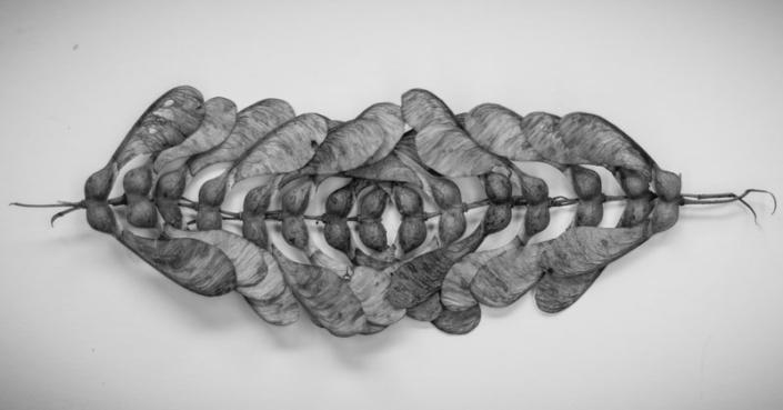 sycamore by Birgit Moffatt