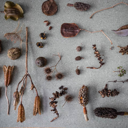 seed pod collection